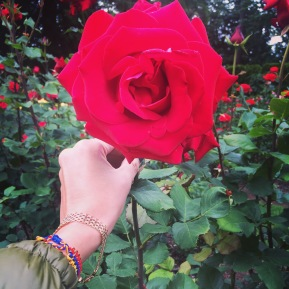 For you a rose in Portland grows