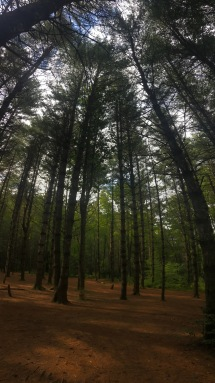 Asehville Pisgah National Forest